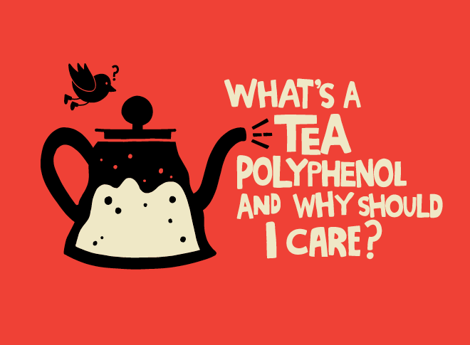Tea Polyphenols explained!